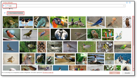 Kategorien fugl i online billeder
